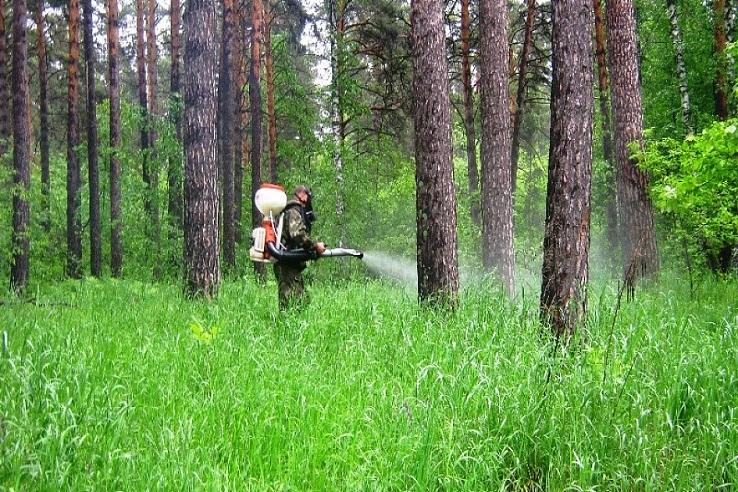 Обработка от клещей лесных массивов в Грозном
